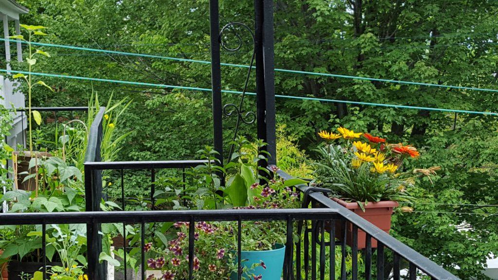 jardiner sur son balcon un mini guide pour les d butants cora loomis nutritionniste. Black Bedroom Furniture Sets. Home Design Ideas